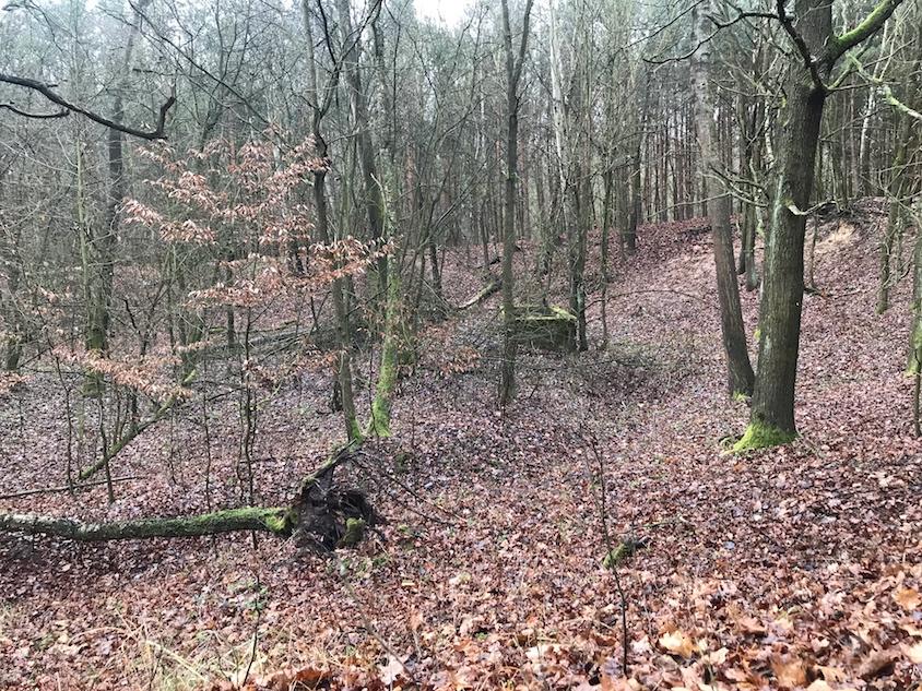 zbiorowa mogiła w lesie